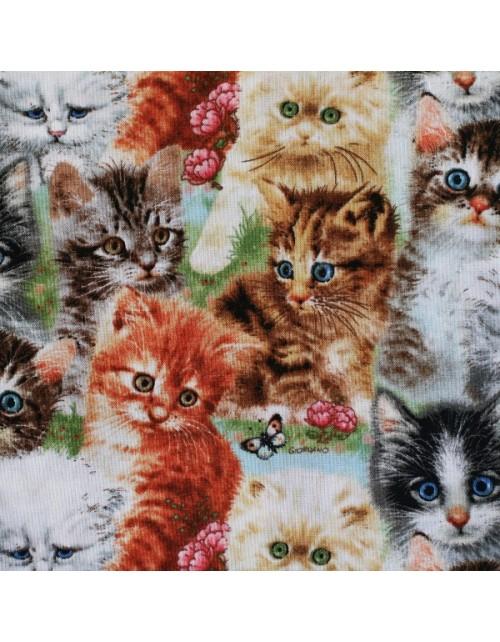 Animales gatitos